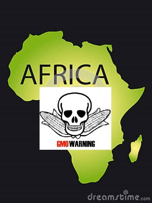 Africa GMO warning