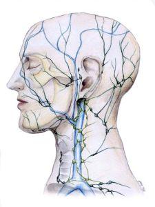 facial-lymph-nodes-diagram-54a0f3734968d