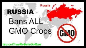 Russia Bans GMO for TSU and blog